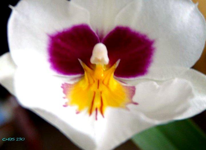 Venez d couvrir comment entretenir vos orchid es annuaire de site web de qualit creasite france Comment entretenir orchidee